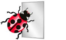 Bugfix for Virtual Mirror